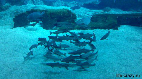 Маленькие акулки