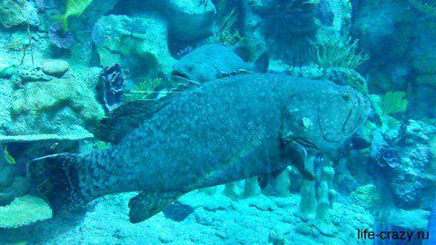 Громадная рыбёха